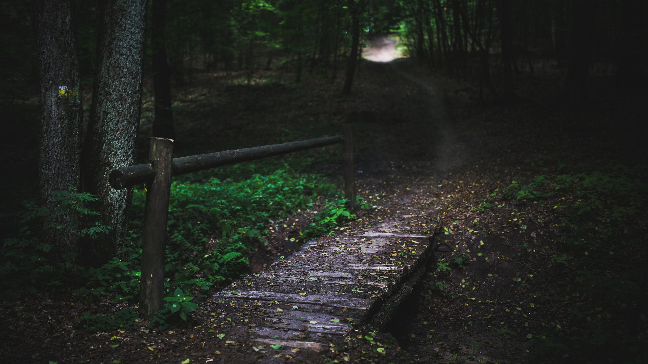 Scripture engagement - dark path