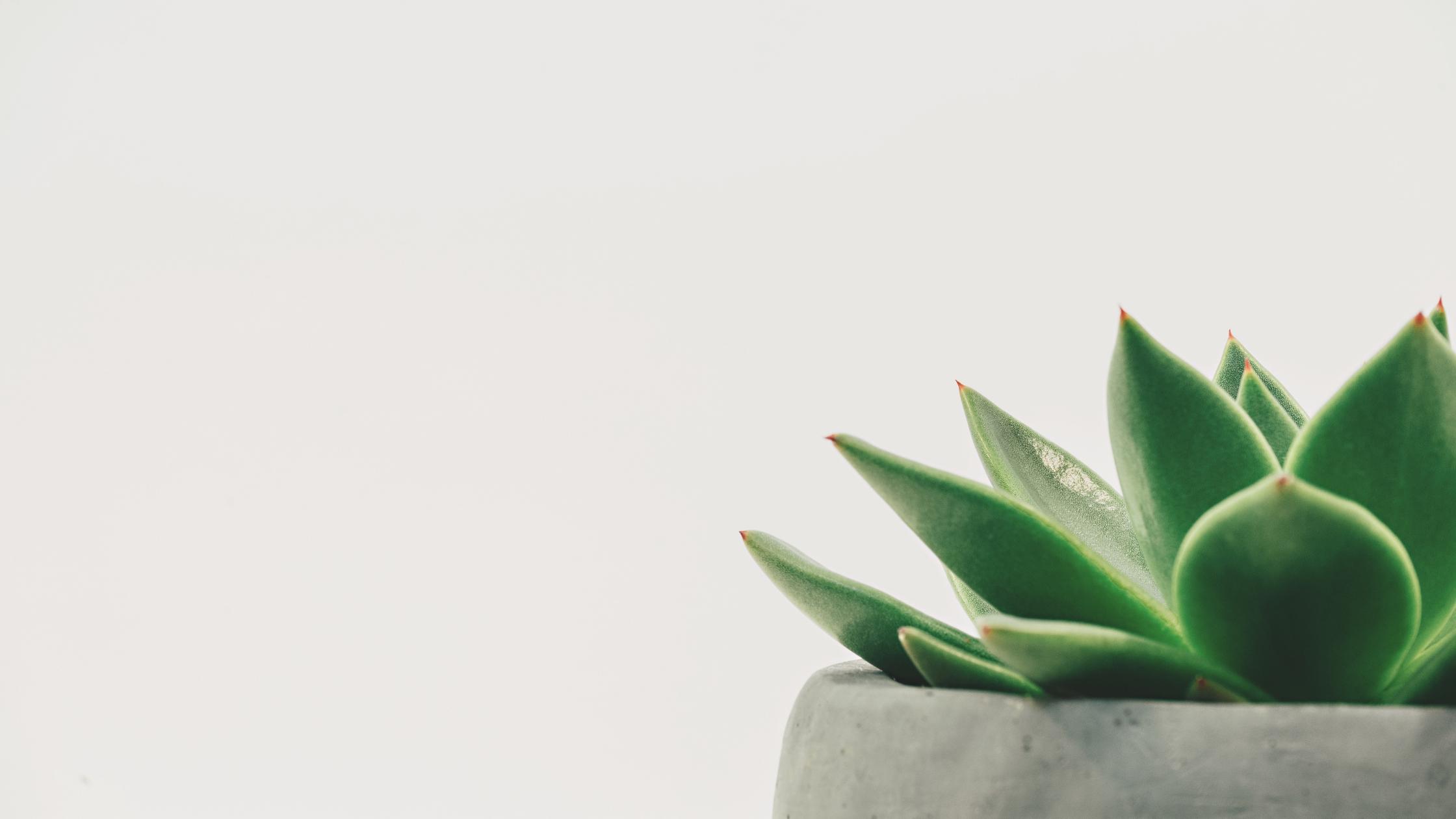 engaging scripture - simple plant